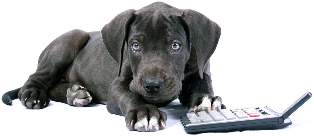 Hund mit Rechner
